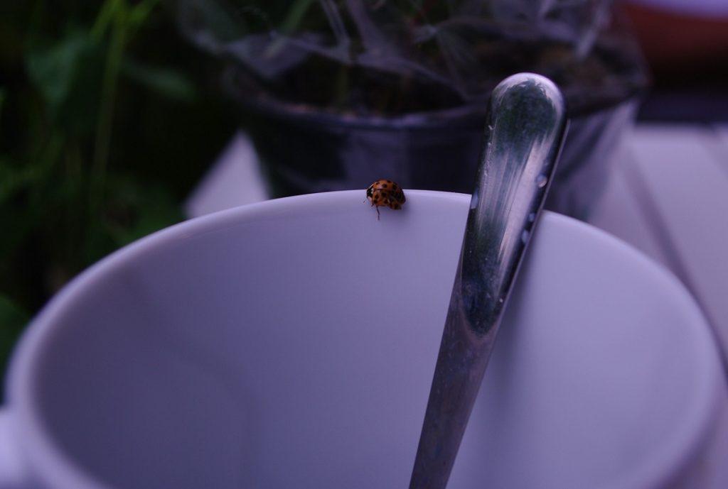 חיפושית בכוס קפה. צילום: xaviera750