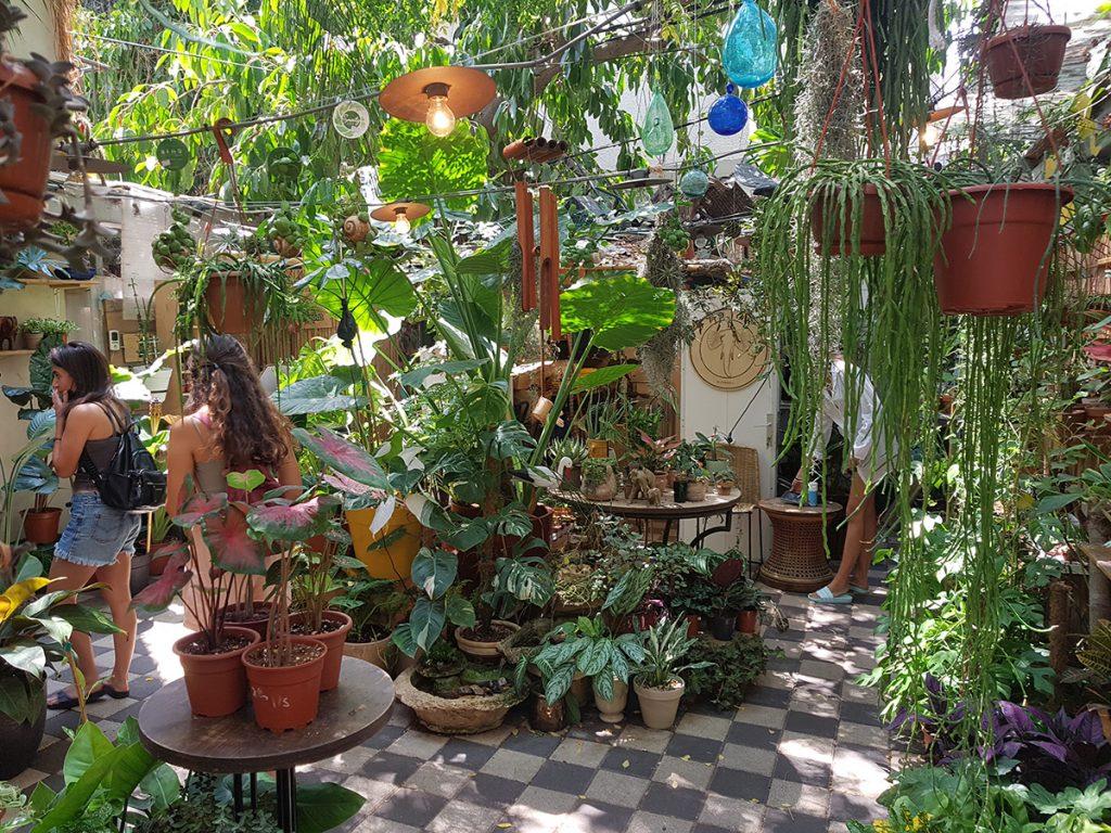 גן סודי באוזן פיל. צילום: מגזין שותים